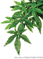 Растение шелковое ExoTerra ABULITON  среднее
