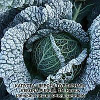 Семена савойской капусты Верона Пурпурова 100грм