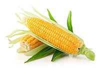 Кукуруза СИ Ротанго (Обр. Форс Зеа)