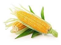 Кукуруза СИ Ротанго (Обр. Стандарт)