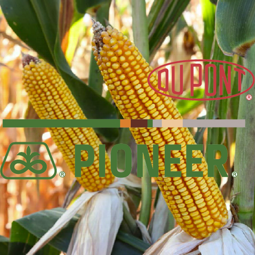 Гибрид кукурузы PR38N86 DuPont Pioneer