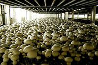 Камеры для выращивания грибов