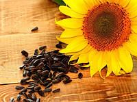 Семена подсолнечника Лейла F1 (Euralis Semences)