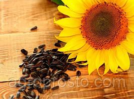 Семена подсолнечника Ягуар F1 (Euralis Semences)