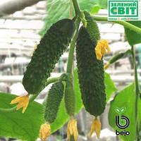 Семена огурца Артист F1 1000 семян (Бейо / Bejo) -  партенокарпик, ультра-ранний гибрид (40-45 дней)