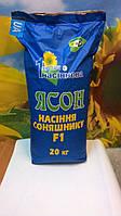 Подсолнечник ЯСОН, Купить засухоустойчивый гибрид ЯСОН. Высокоурожайный подсолнечник. Фракция 3,0-3,25. АСП