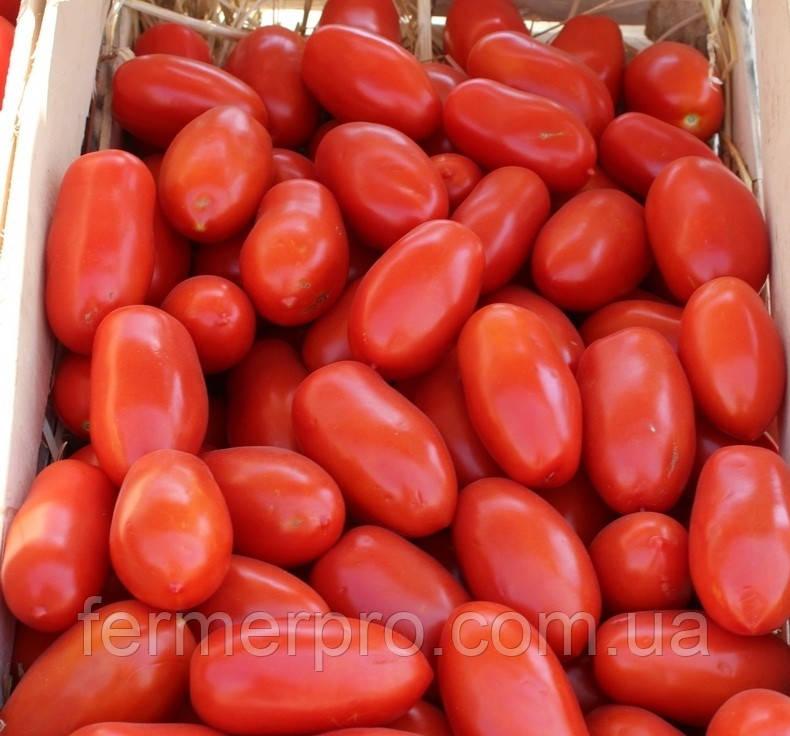 Семена томата Улиссе F1 \ Ulisse F1 2500 семян Syngenta