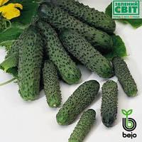 Семена огурца Амант F1 1000 семян (Бейо / Bejo) - партенокарпик, ультра-ранний гибрид (40-45 дней)