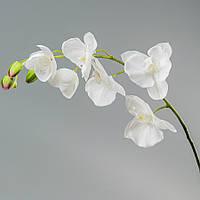 Орхидея (77 см)