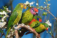 Фотоплитка  птицы