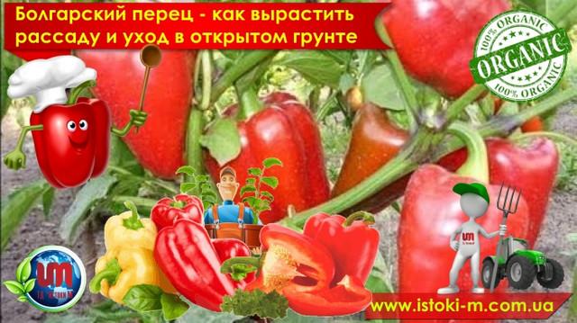 Технология посадки семян болгарского перца на рассаду_Уход за болгарским перцем в открытом грунте