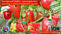 Болгарский перец – рассада и уход в открытом грунте