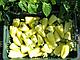 Семена перца Диментио F1 \ Dimentio F1 500 семян Syngenta, фото 5