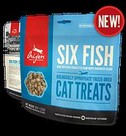 ORIJEN / 6 FISH / CAT & KITTEN /35G / Лакомство для котов и кошек, котят