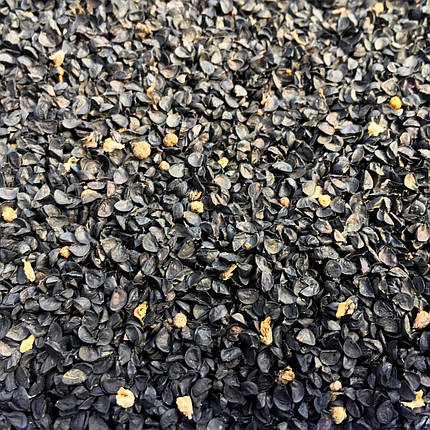 Семена лук микрозелень , фото 2
