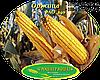 Семена кукурузы Оржица (Оржиця 237 МВ) ФАО 240, фото 2