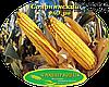 Семена кукурузы Солонянський 298 СВ (ФАО 310), фото 2