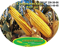 Семена кукурузы Солонянський 298 СВ (ФАО 310)
