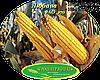 Семена кукурузы Любава 279 МВ (ФАО 270), фото 2