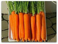 Морковь Лагуна F1  100 000 шт  /1,6-1,8 мм/