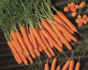 Морковь Лагуна F1  25 000 шт  /1,8 - 2,0 мм/