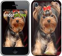"""Чехол на iPhone 3Gs Йоркширский терьер """"929c-34-8956"""""""