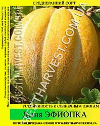 Семена дыни «Эфиопка» 0.5 кг