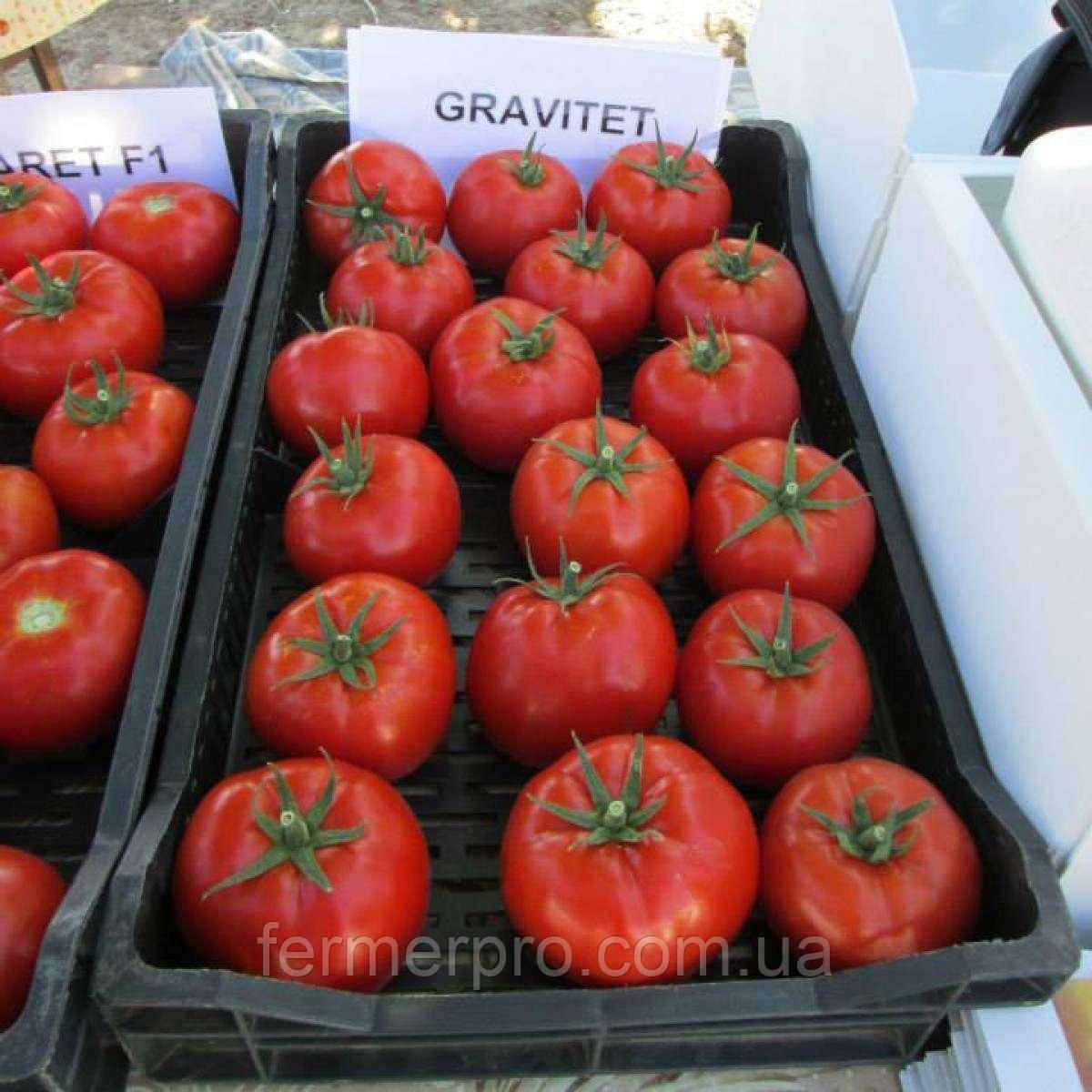 Семена томата Гравитет F1 \  Gravitet F1 500 семян Syngenta
