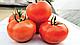 Семена томата Т-97082 (Квалитет) F1 \ Т-97082 (QUALITET F1) Syngenta 500 семян, фото 2