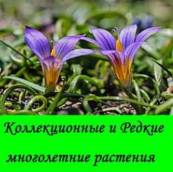 Коллекционные и Редкие альпийские растения