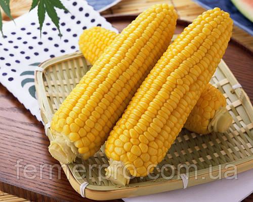 Семена кукурузы Джубили F1 \ Dzhubili F1 Syngenta 100000 семян