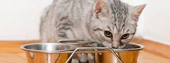 Корм для котів, кішок і кошенят
