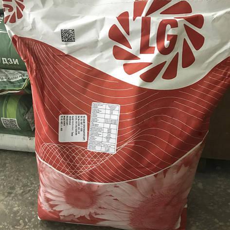Семена подсолнечника, Лимагрейн , ЛГ 5542 КЛ, под евролайтинг, фото 2