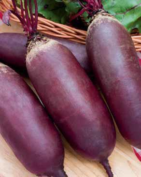 Семена свеклы Атаман 100г Коуел