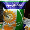 Семена подсолнечника, Syngenta, НК БРИО