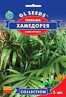 "Семена пальмы бамбуковой ""Хамедорея Изящная"", 5 шт, ""GL SEEDS"", Украина"