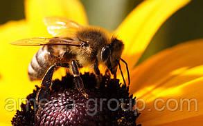 Куплю мед оптом Кировоградская Черкасская область, фото 3