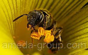 Закупаем мед оптом в Кировоградской, Черкасской, Николаевской области, фото 3
