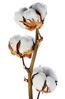 Декоративная ветка хлопка, фото 1
