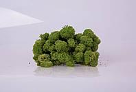 Стабилизированный мох medium green 250 грамм/упаковка