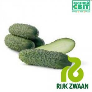 Семена огурца Пучини F1 (Puccini F1), ( Rijk Zwaan), 10 г — партенокарпический корнишон, фото 2