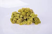 Стабилизированный мох olive 250 грамм/упаковка