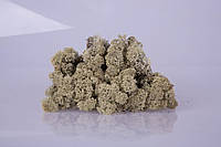 Стабилизированный мох silver grey 250 грамм/упаковка