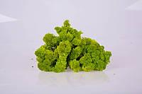 Стабилизированный мох купить spring green 250 грамм/упаковка