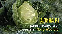 Капуста Алина F1 Nong Woo Bio 2500 семян