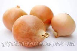 Лук Делфис Allium Италия 1 кг