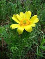 Адонис-лекарственная трава (30гр)