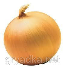Лук Честер F1 Allium 1 кг Италия