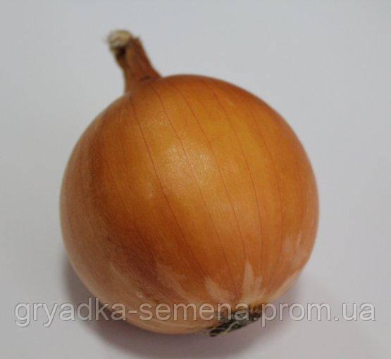 Лук Юниор F1 Allium Италия 1 кг