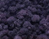 """Стабилизированный мох """"Ягель"""" фиолетовый 0025"""